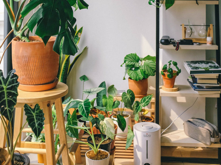 Cool Indoor Garden Ideas for a Refreshing Look